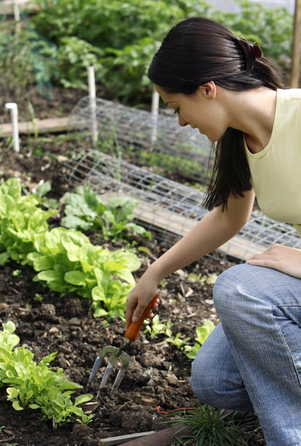 Dr. Raouf Farag – How Caring for a Small and Simple Garden Benefits the Environment at Large